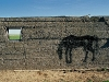 street-horse14