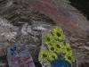 india-graffiti-07